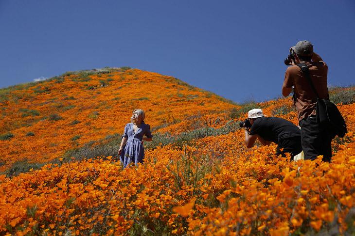 Весна и оранжевые маки в Калифорнии