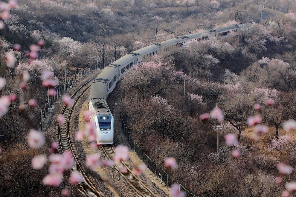 Поезд в Пекине и сквозь цветущие персики