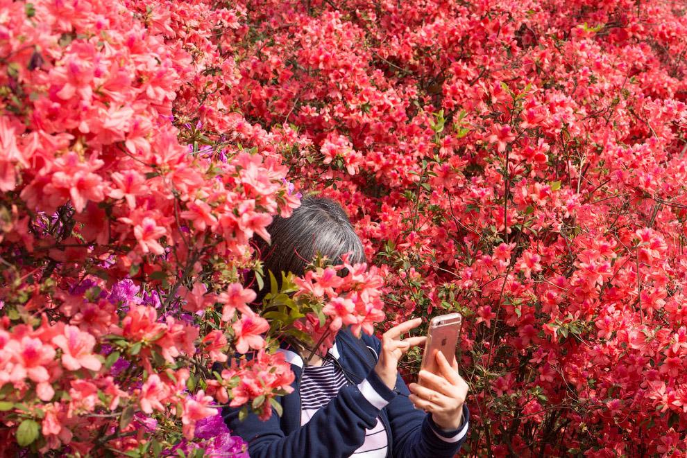 Весенние краски в провинции Гуандун, Китай