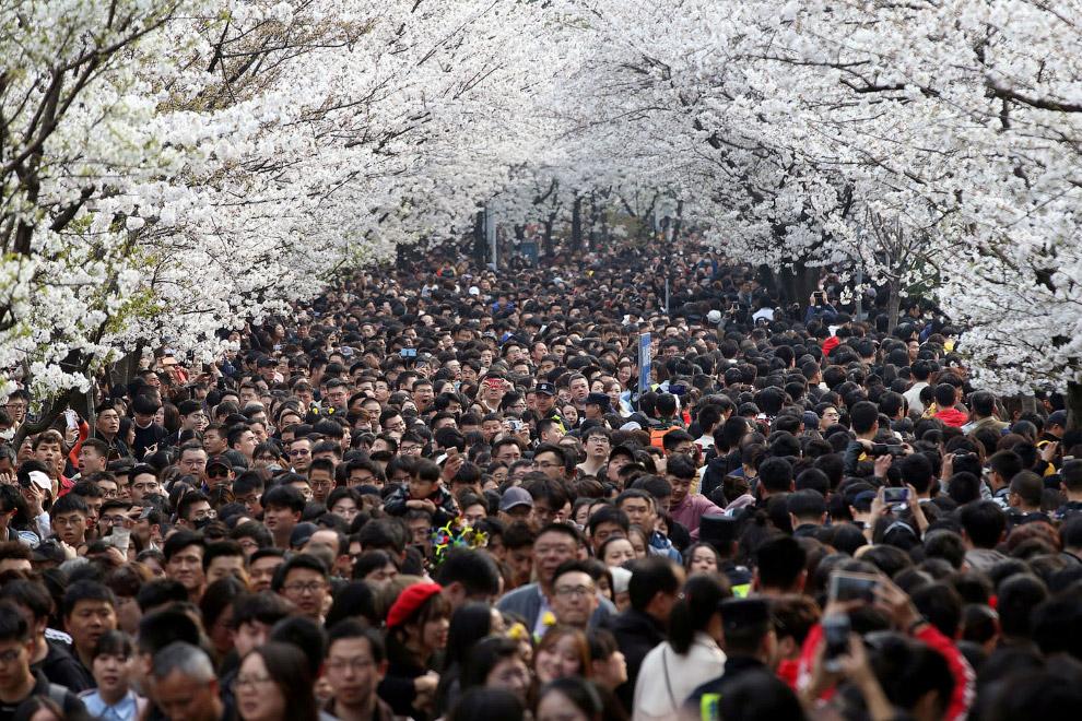 Хорошо весной в Китае