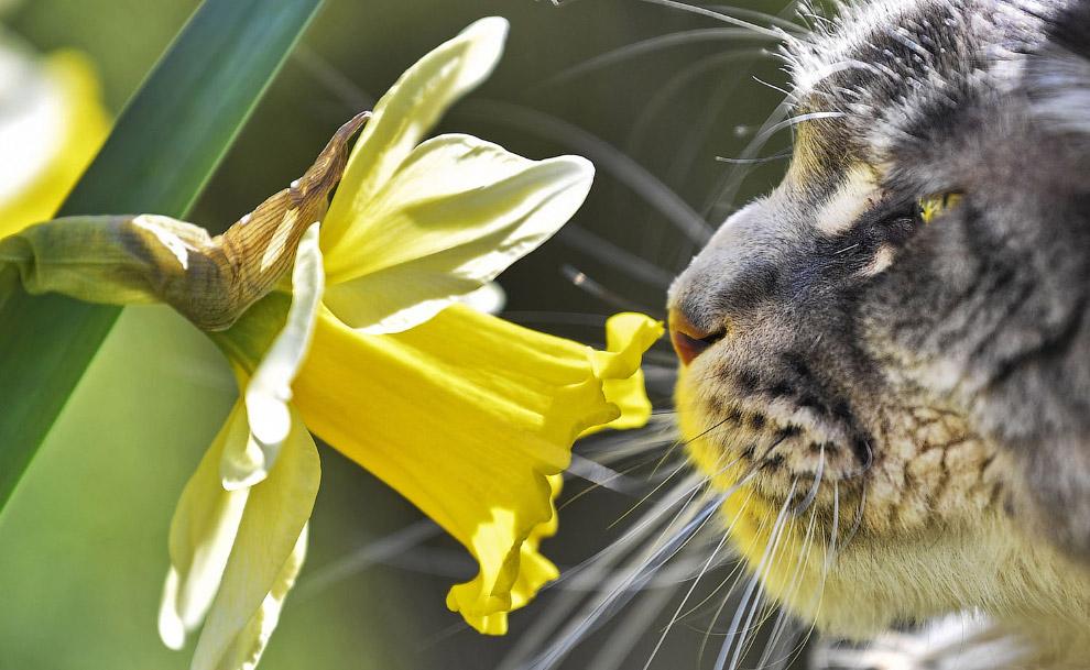 Суровый кот заинтересовался цветком, Германия