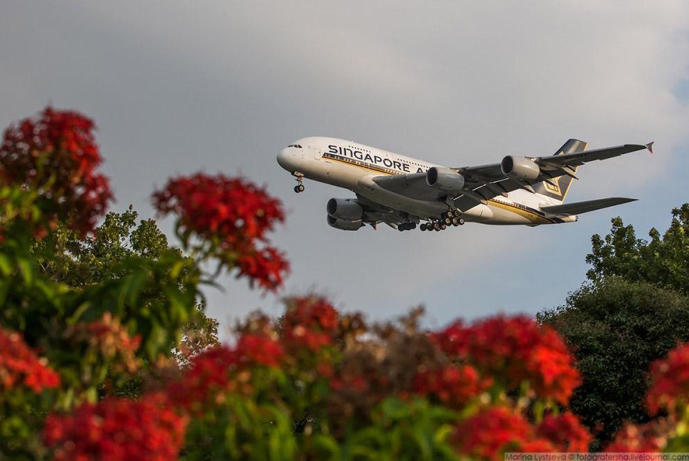 А380 SINGAPORE AIRLINES в Сингапуре, 2016 год.