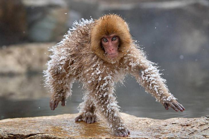 Необычный конкурс Comedy Wildlife Photography Awards 2019