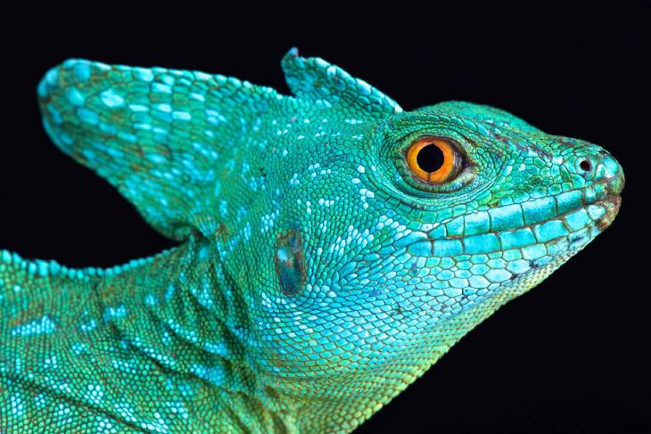 Холодный инстинкт: красота рептилий