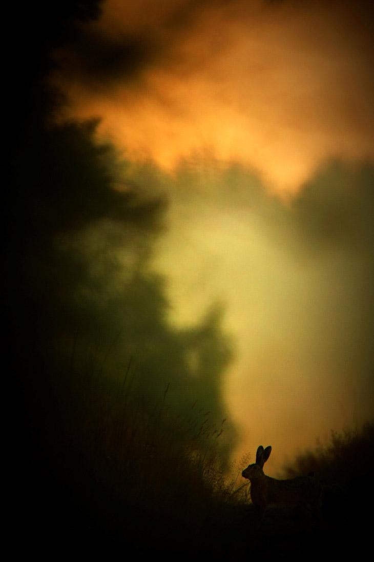 На опушке леса. Заяц