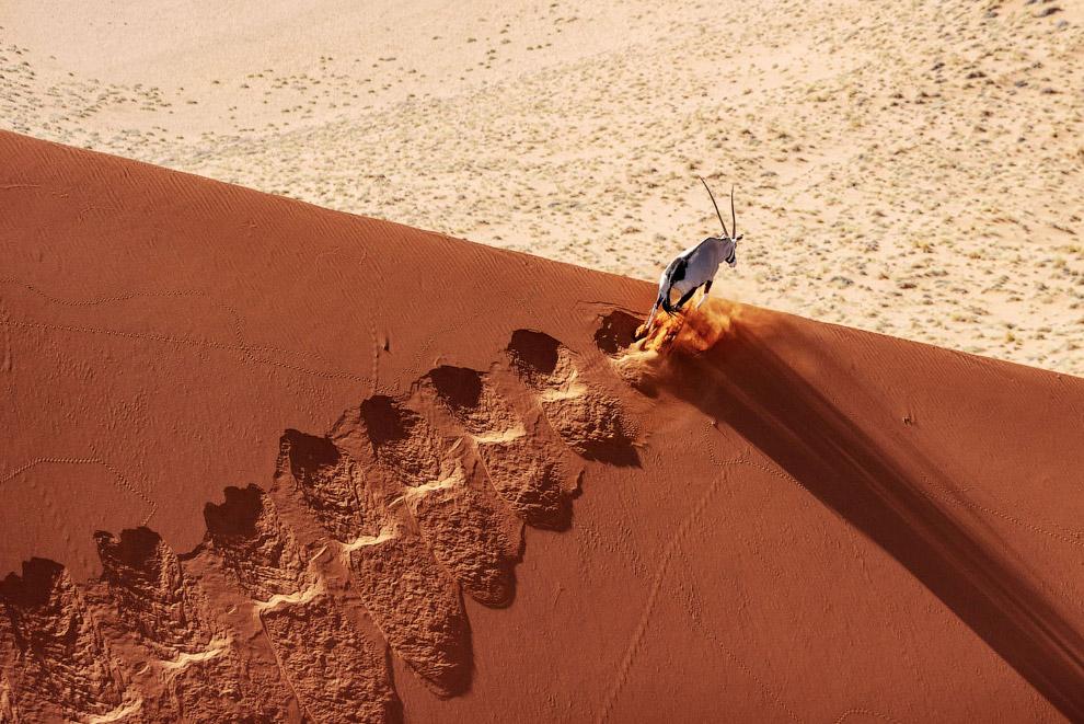 Пустыня Намиб и антилопа