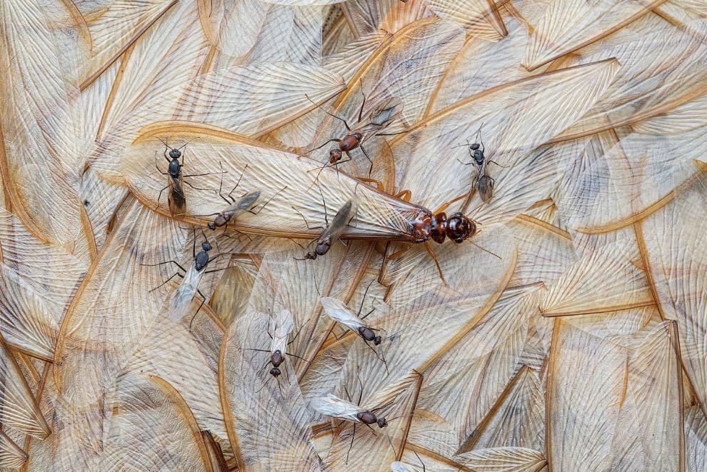 Термиты тащат себе обед