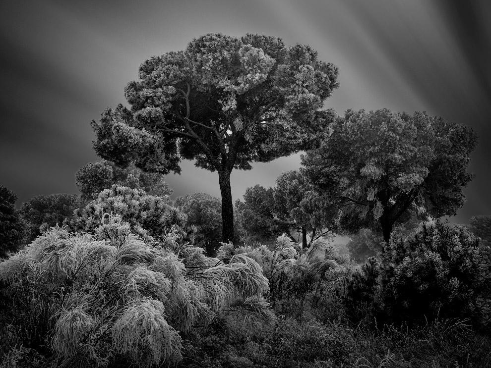 Зимний спящий лес