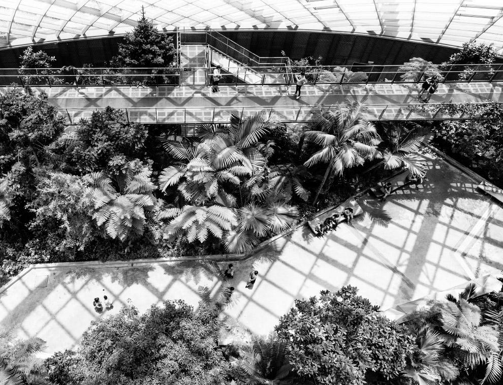 Gardens by the Bay: футуристичні прибережні сади в Сінгапурі