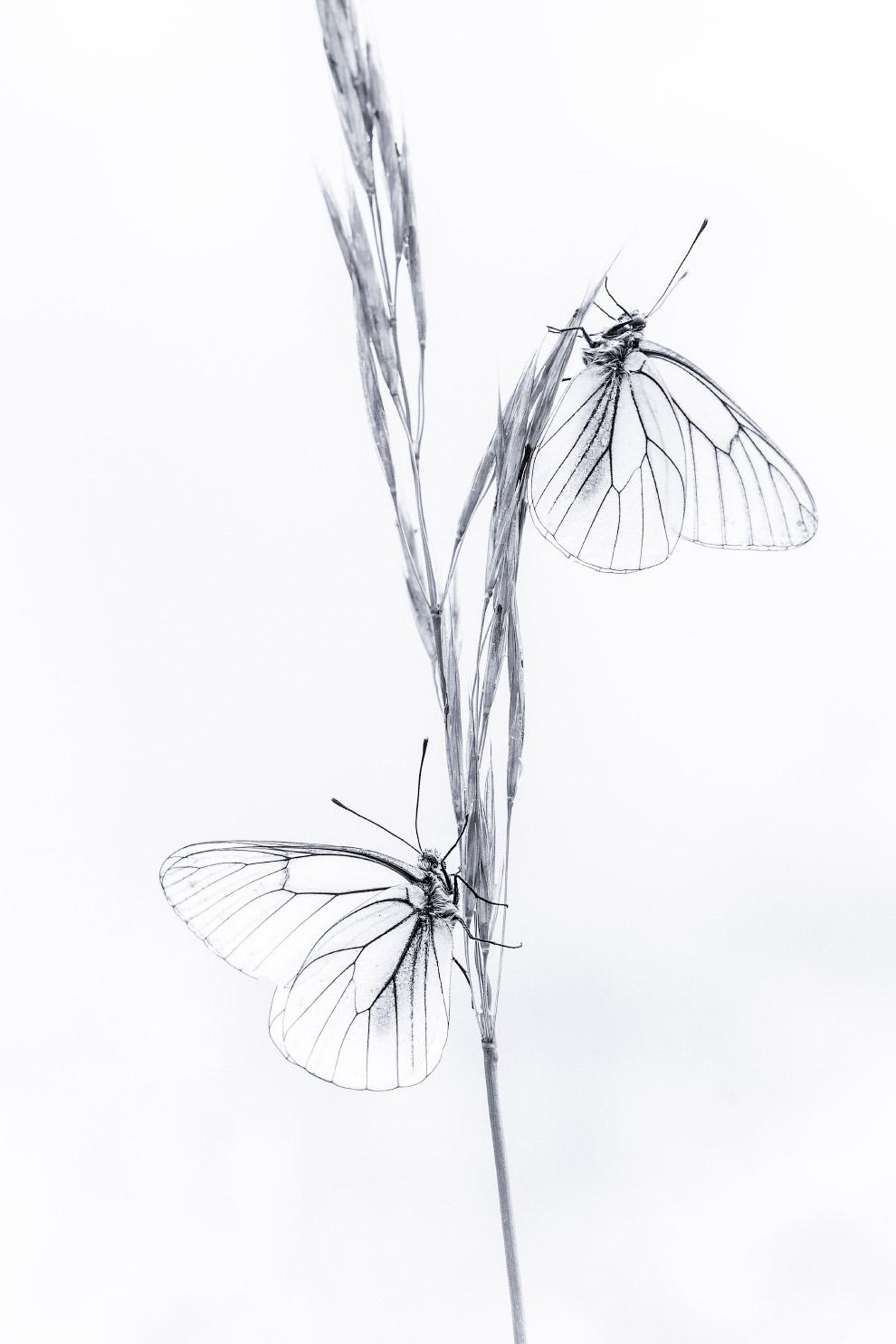 Дневная бабочка из семейства белянок