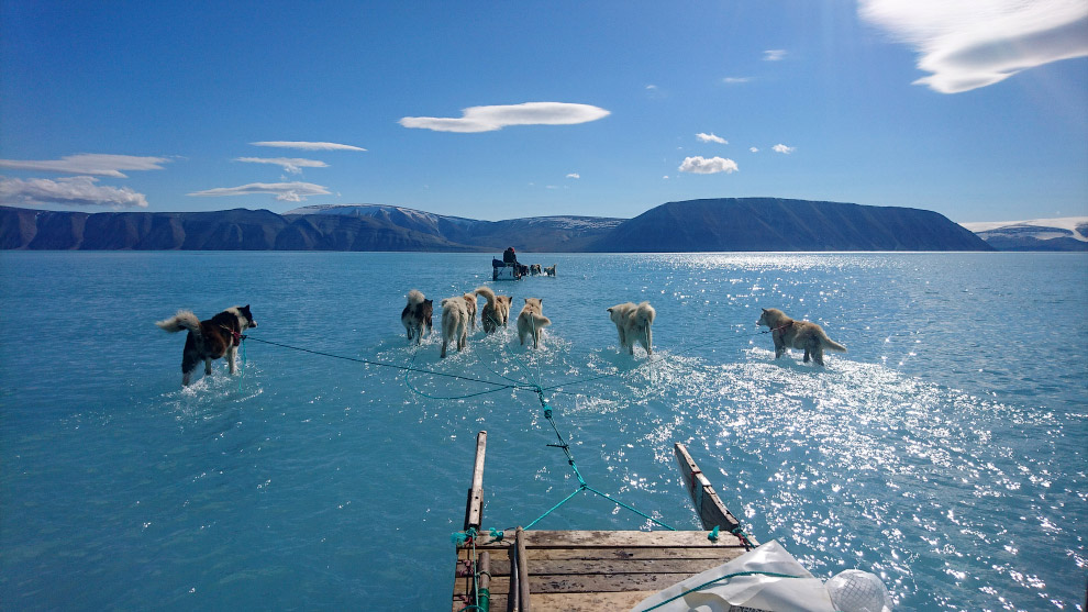 Ездовые собаки на северо-западе Гренландии