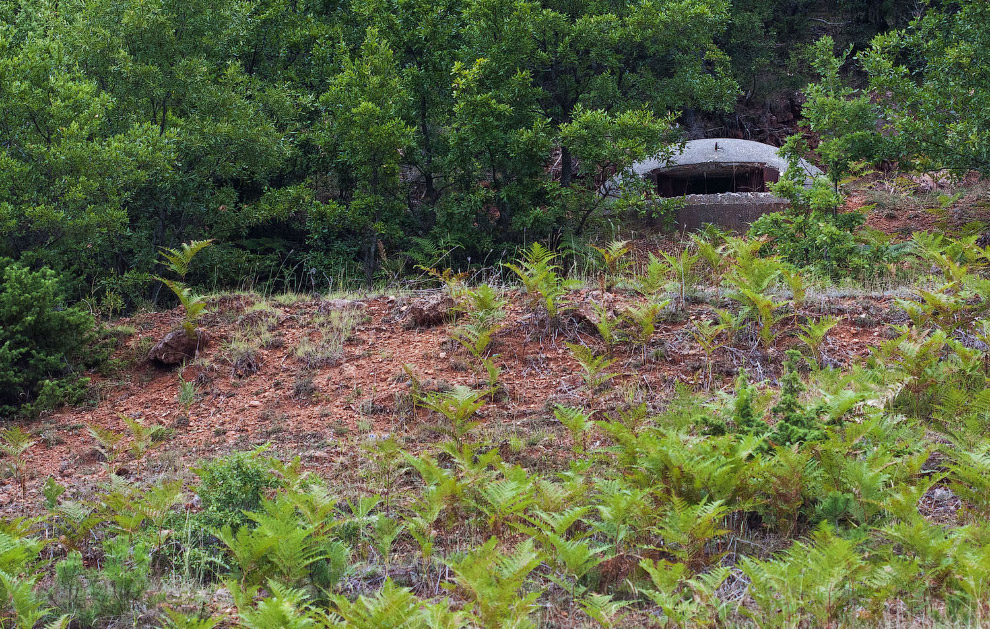 Бункер в лесу
