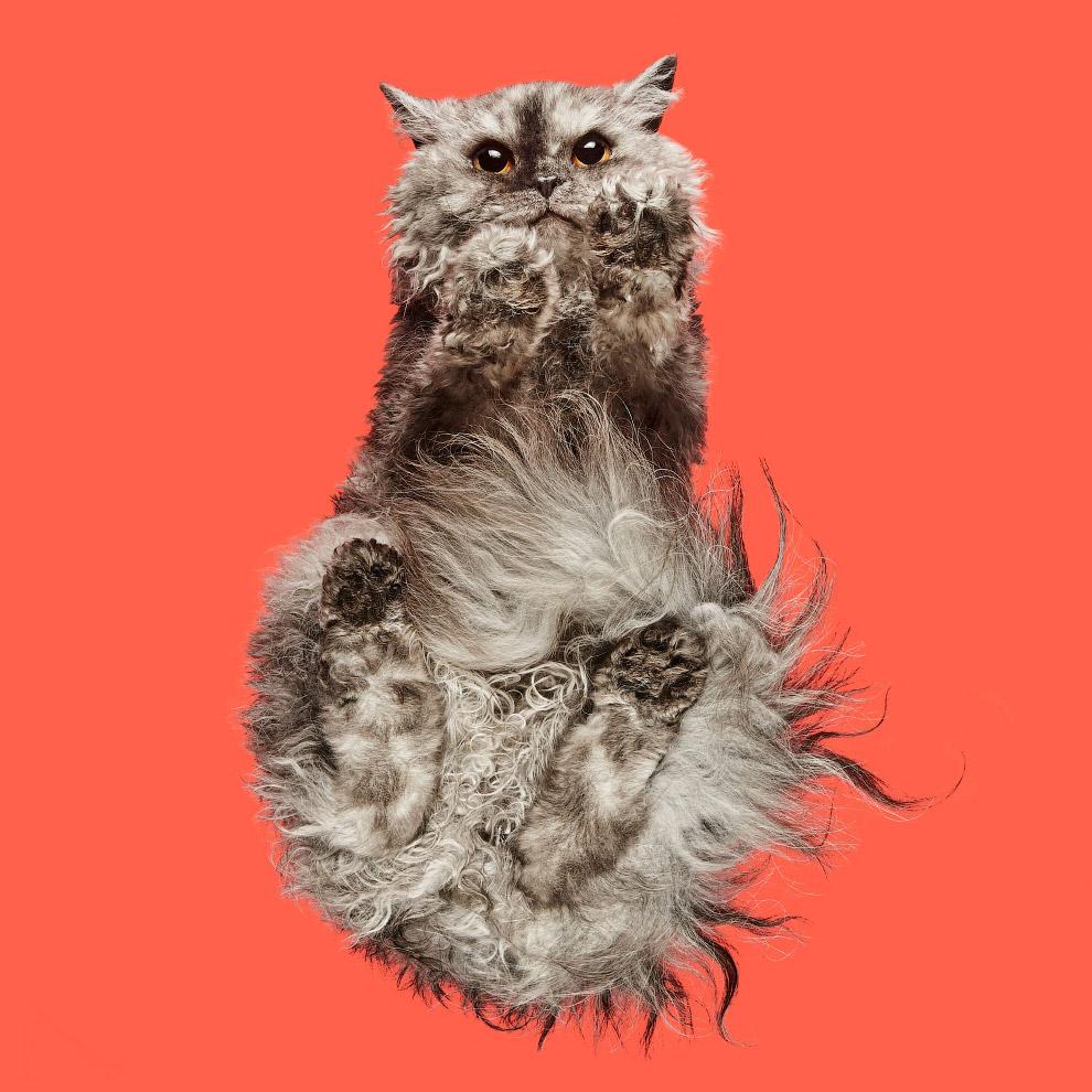 Как выглядит кот снизу