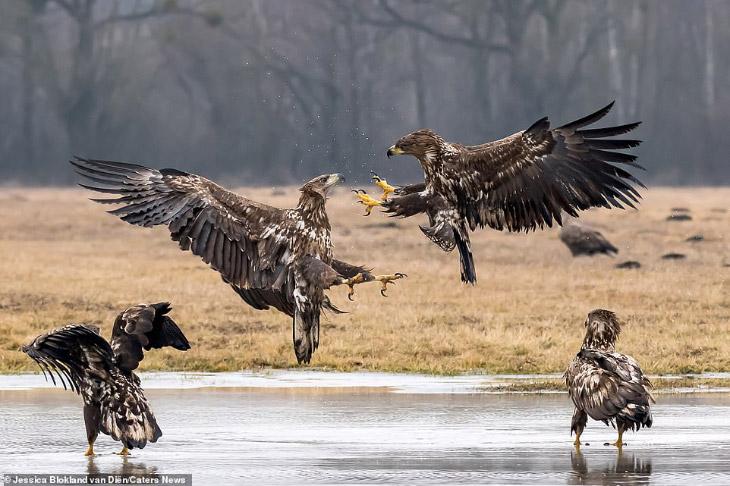 Воздушный бой: битва орлов