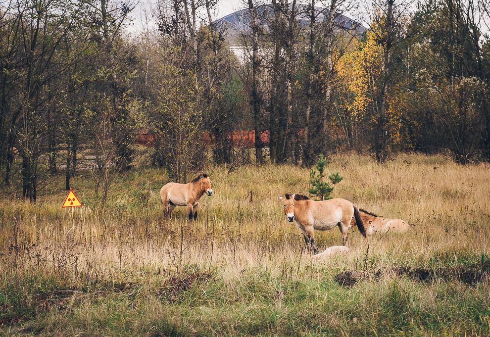 Лошади и знак