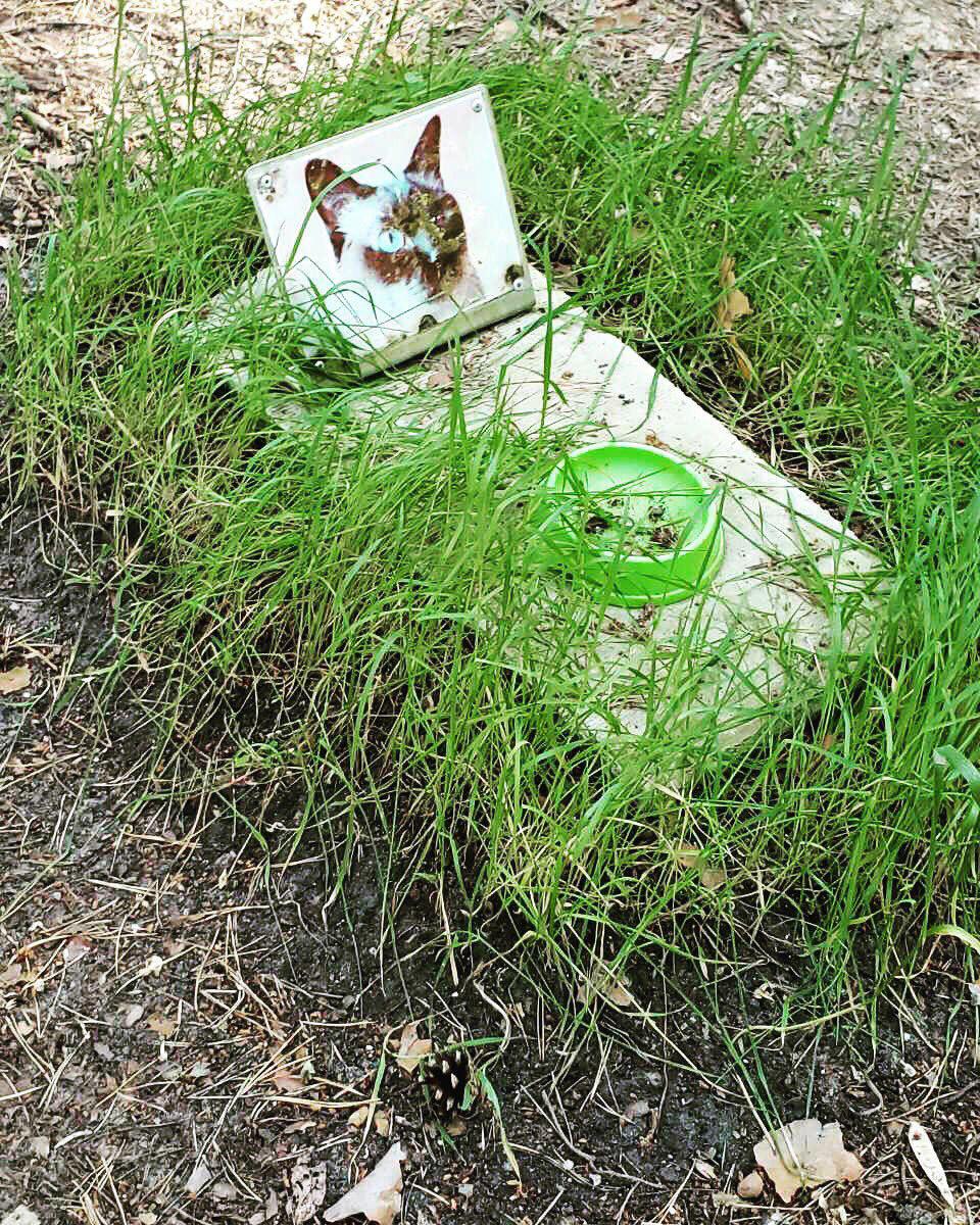 Могилка кота