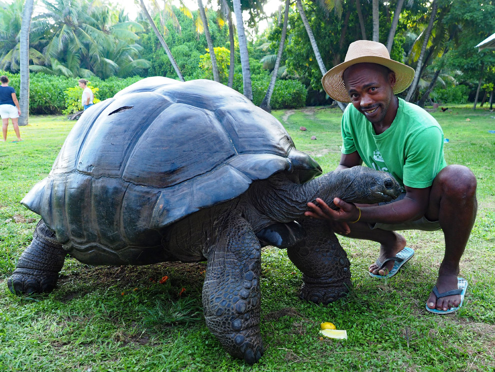 Это самая большая в мире черепаха
