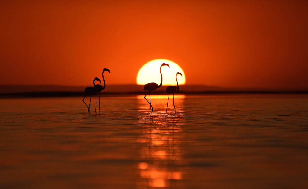 Фламинго гуляют по озеру Туз в турецкой провинции Конья