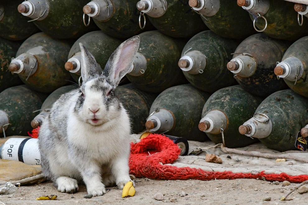 Кролик и минометные снаряды