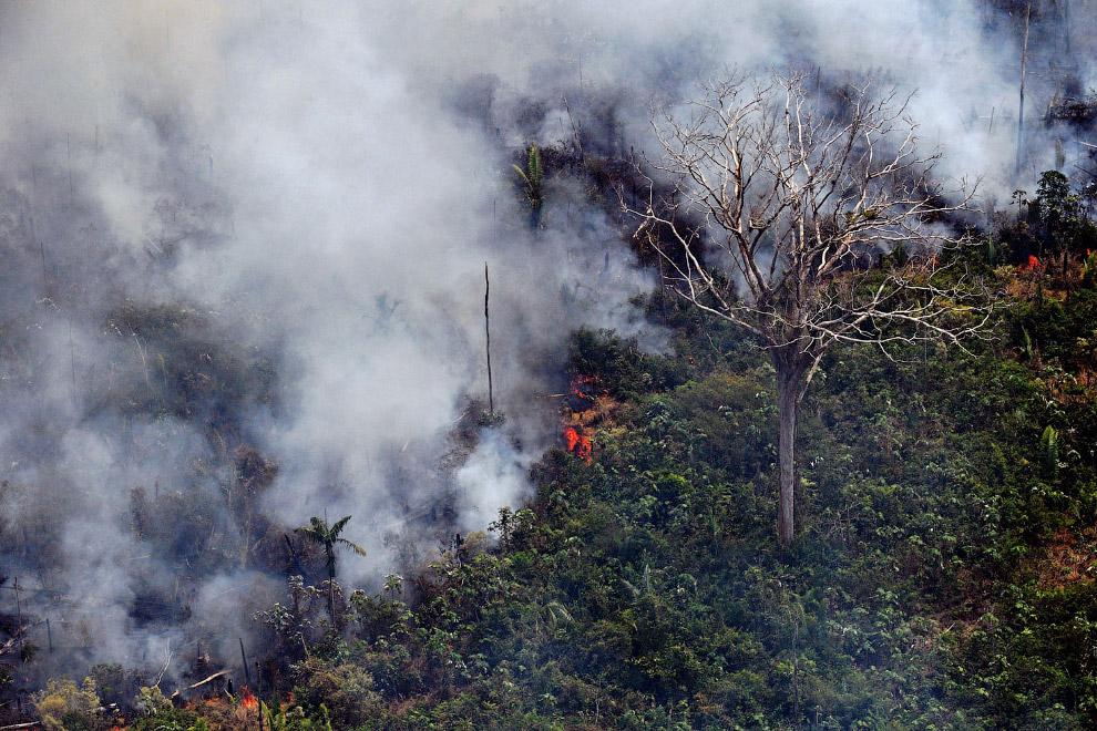 Горящие амазонские леса