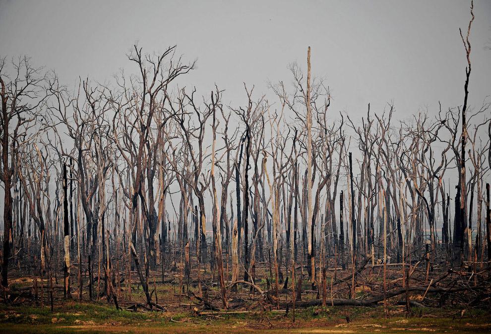 Сожженный участок тропического леса Амазонки