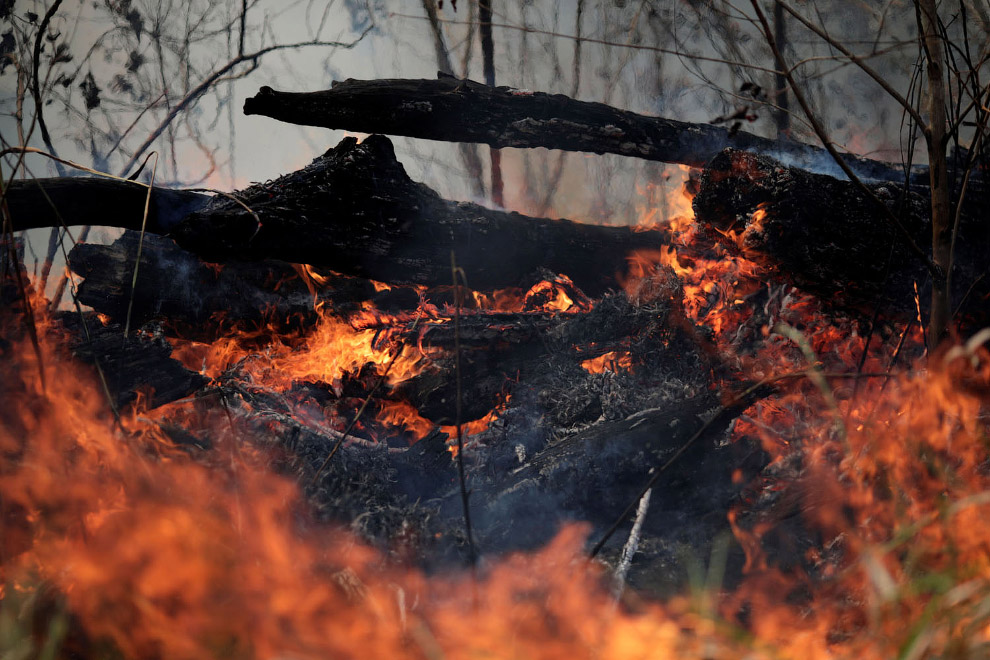 Горят Амазонские леса «легкие планеты»