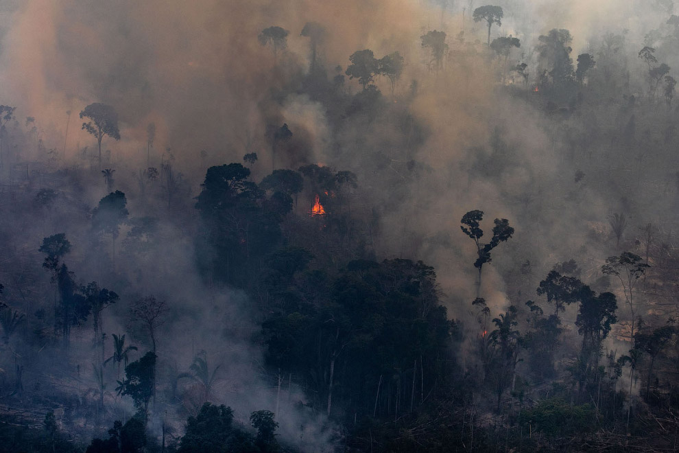 Горят тропических лесов Амазонки