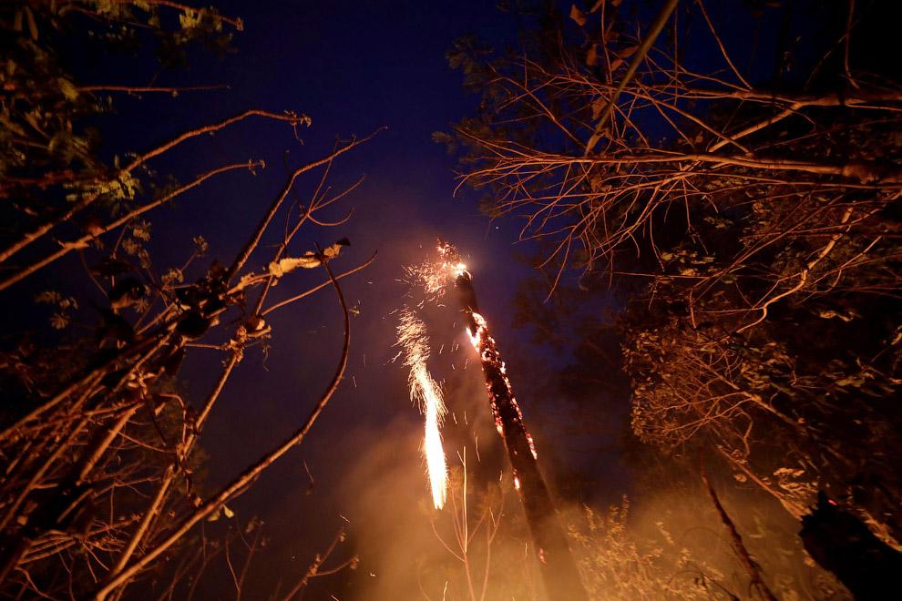 Горят леса после поджогов лесозаготовителей и фермеров