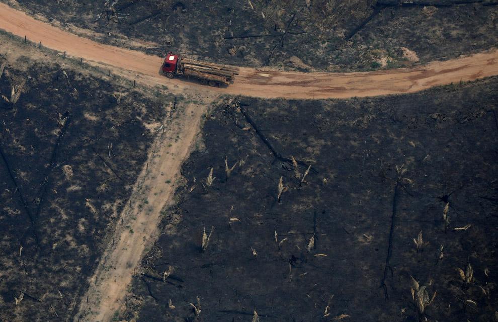 Удобно вывозить лес на машинах