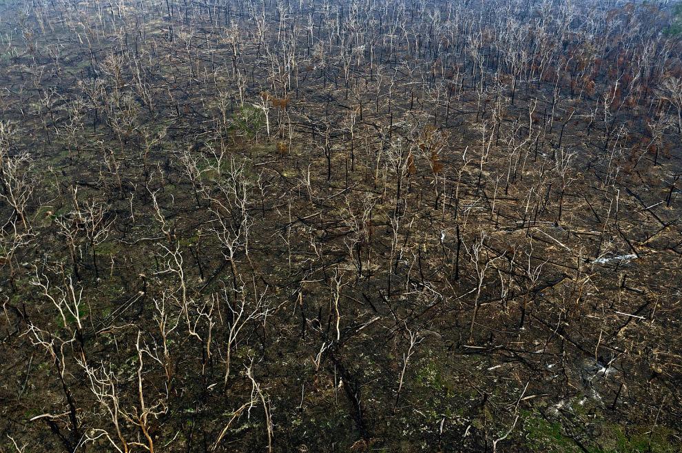 Сгоревший лес в штате Рондония, Бразилия