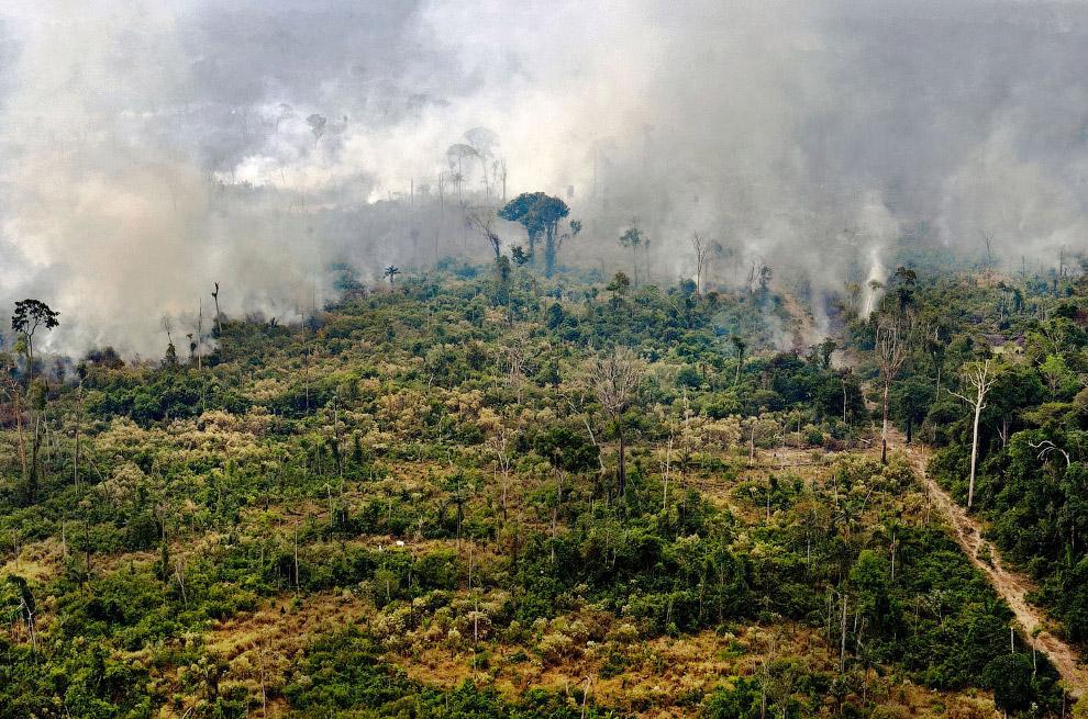 Горящая область в тропических лесах Амазонки