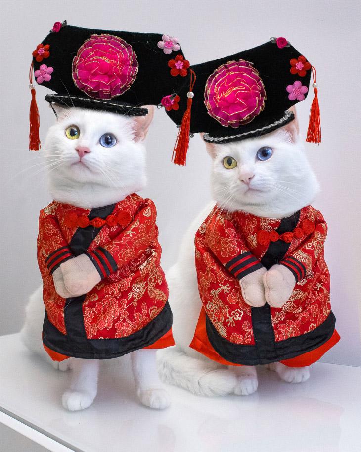 Белые кошки с разными глазами