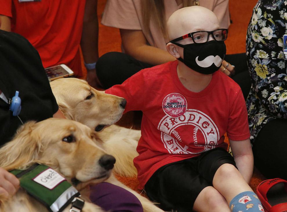 Собаки-терапевты