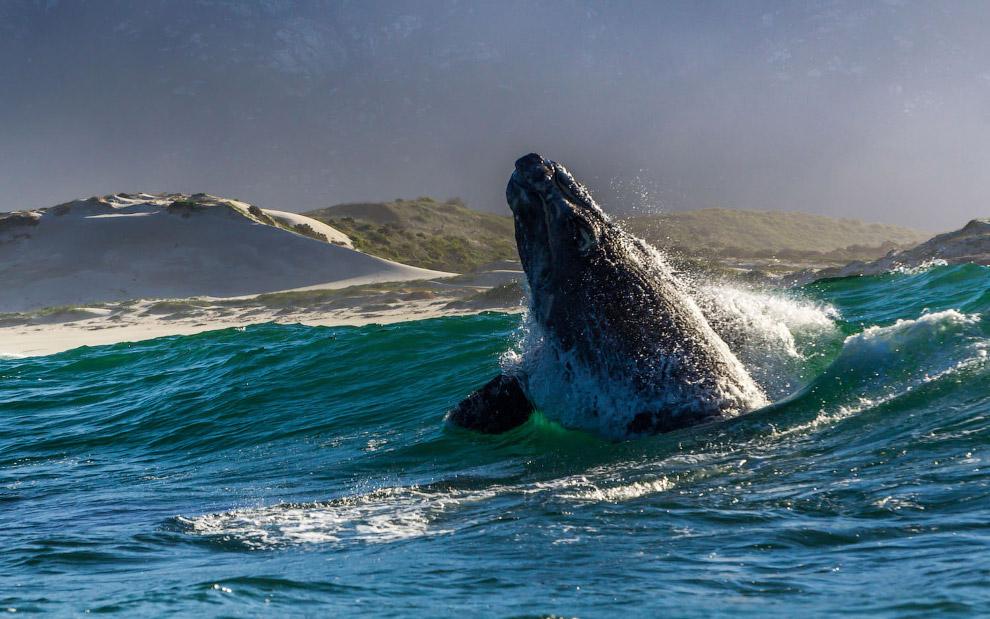 южные киты