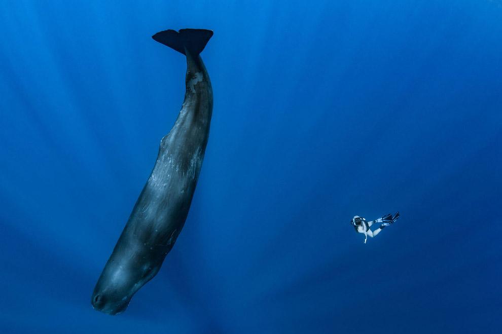 Кашалот и аквалангист