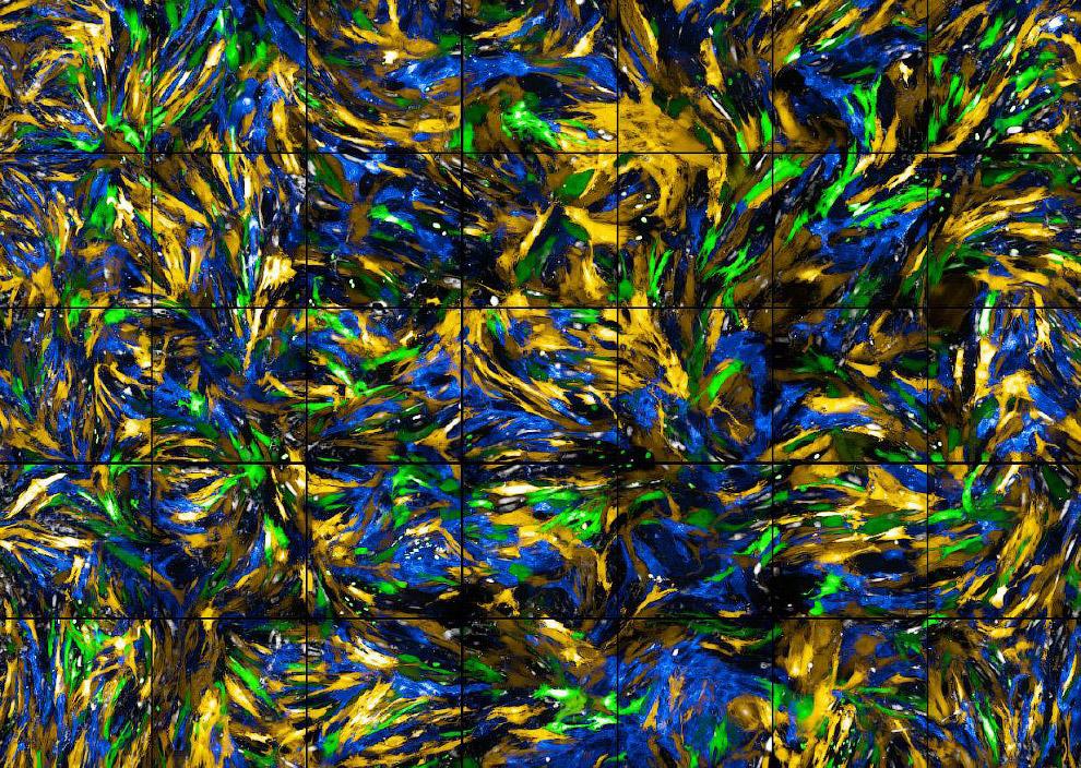Красочное изображение клеток кровеносных сосудов у мыши