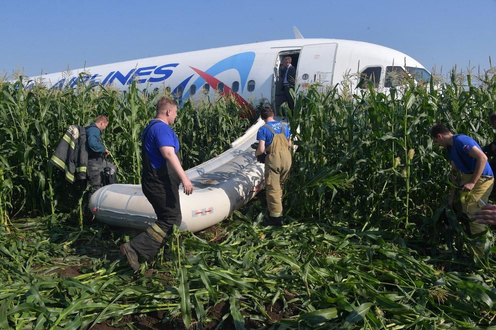 A321 «Уральских авиалиний» в кукурузном поле