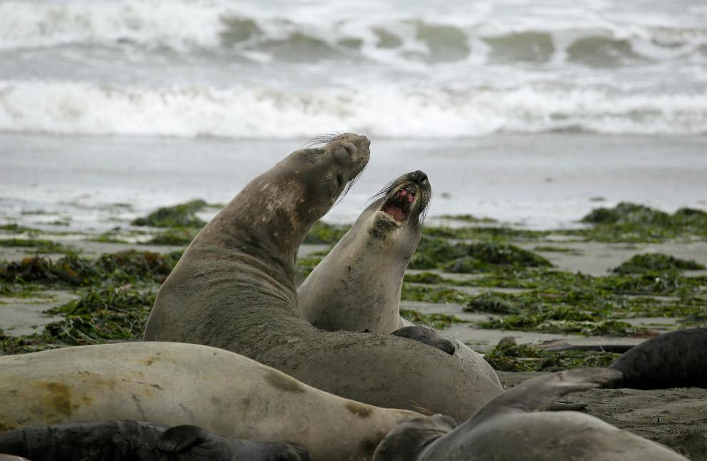Elephant Seal Beach Takeover
