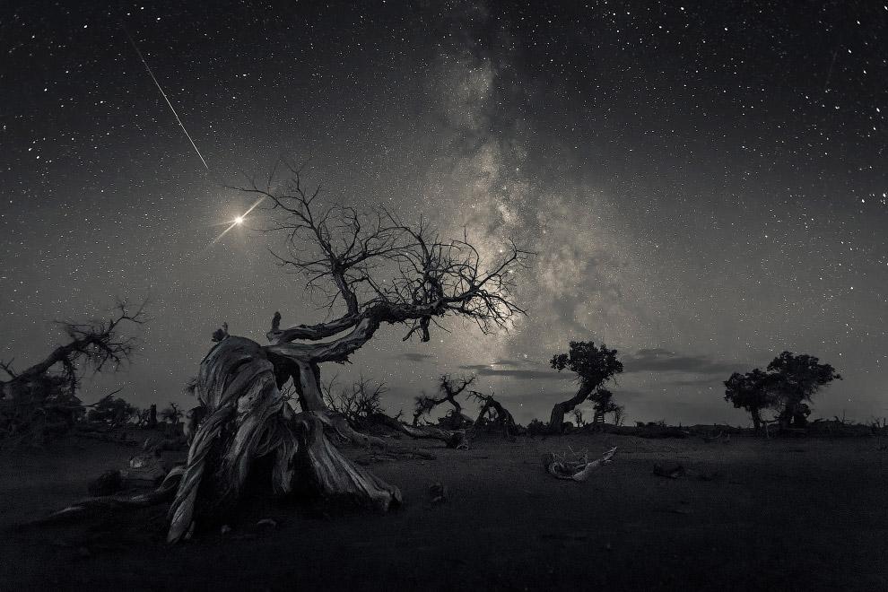 Погибшее дерево и Млечный путь
