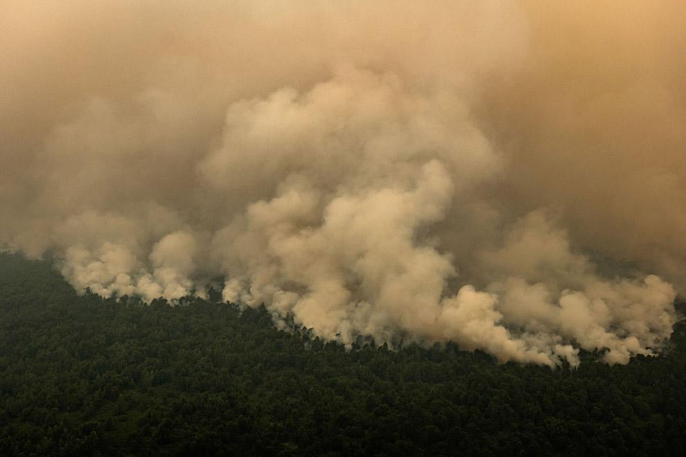 Леса горят, скоро здесь будут масло производить