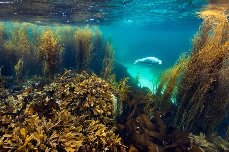 Жизнь в Саду Морских водорослей