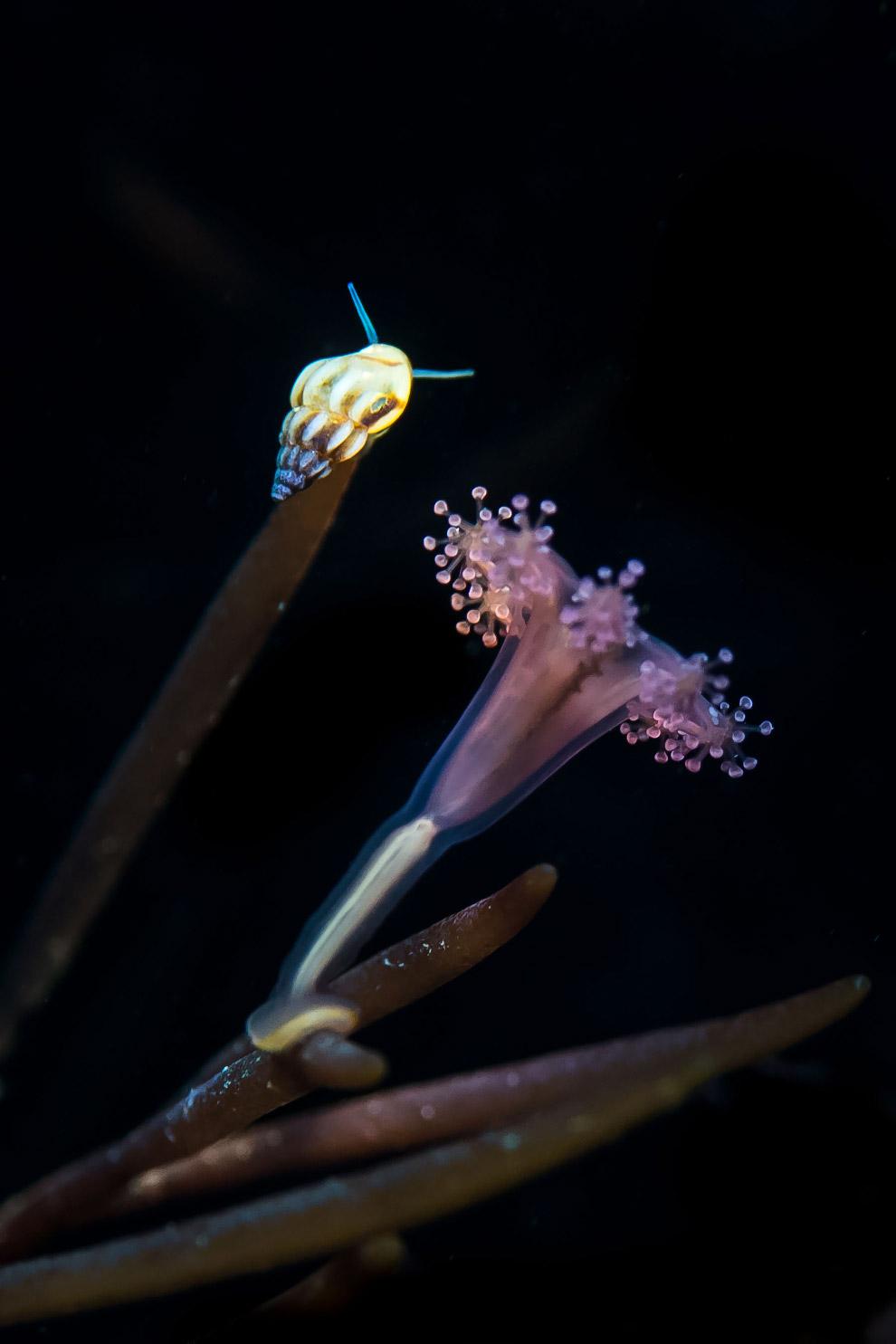 Медуза и улитка