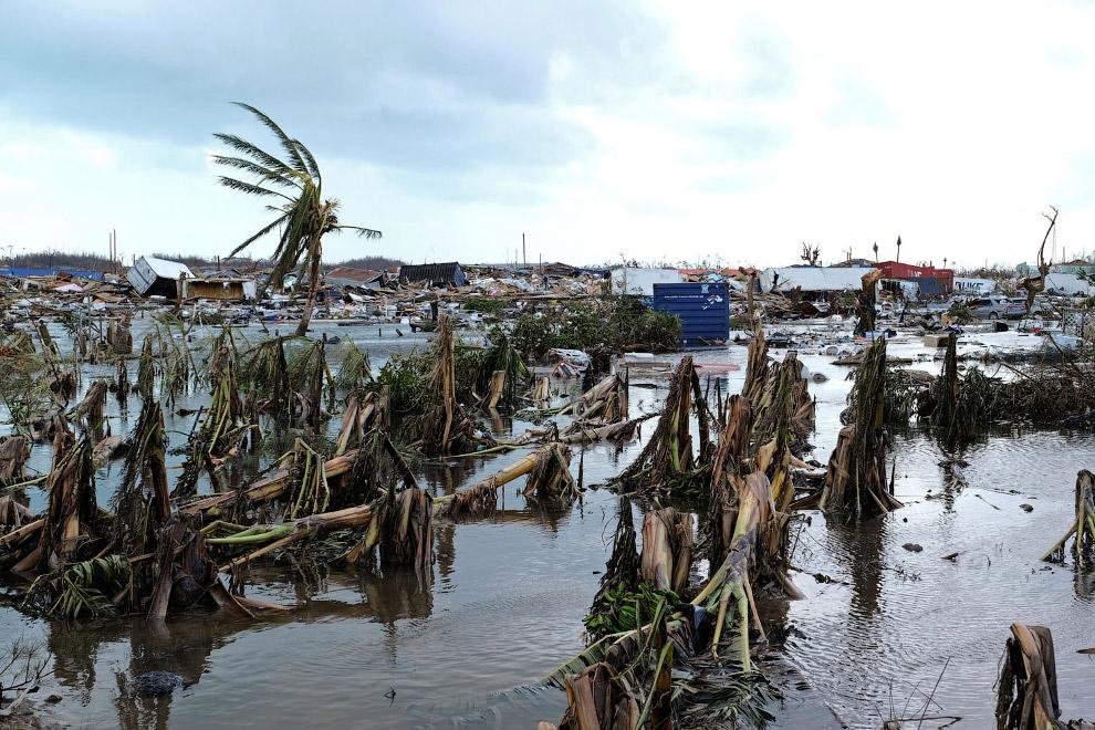 Ураган поломал пальмы