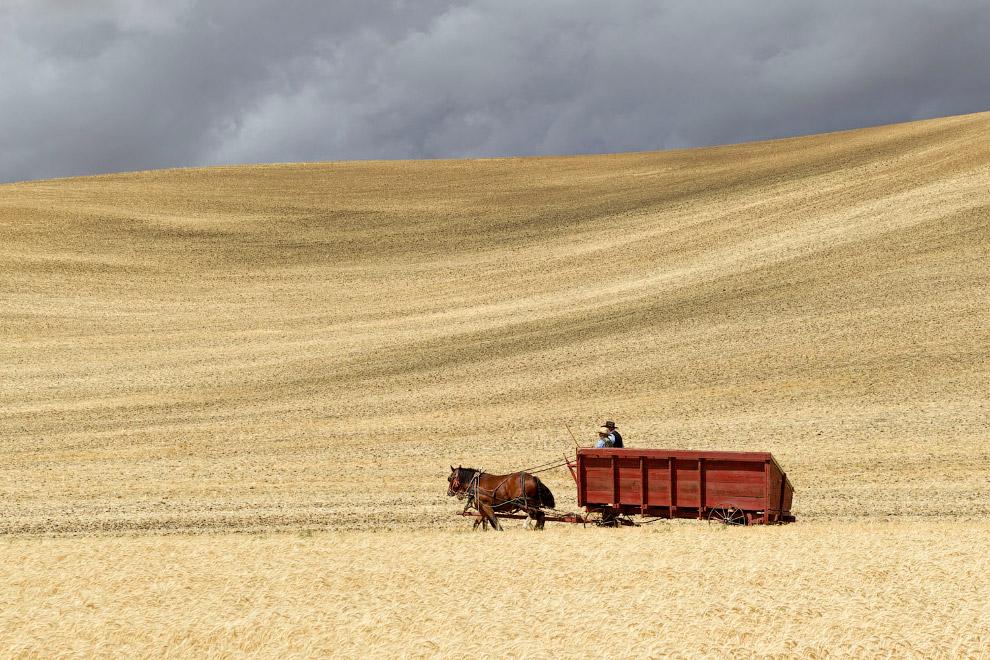Фермеры