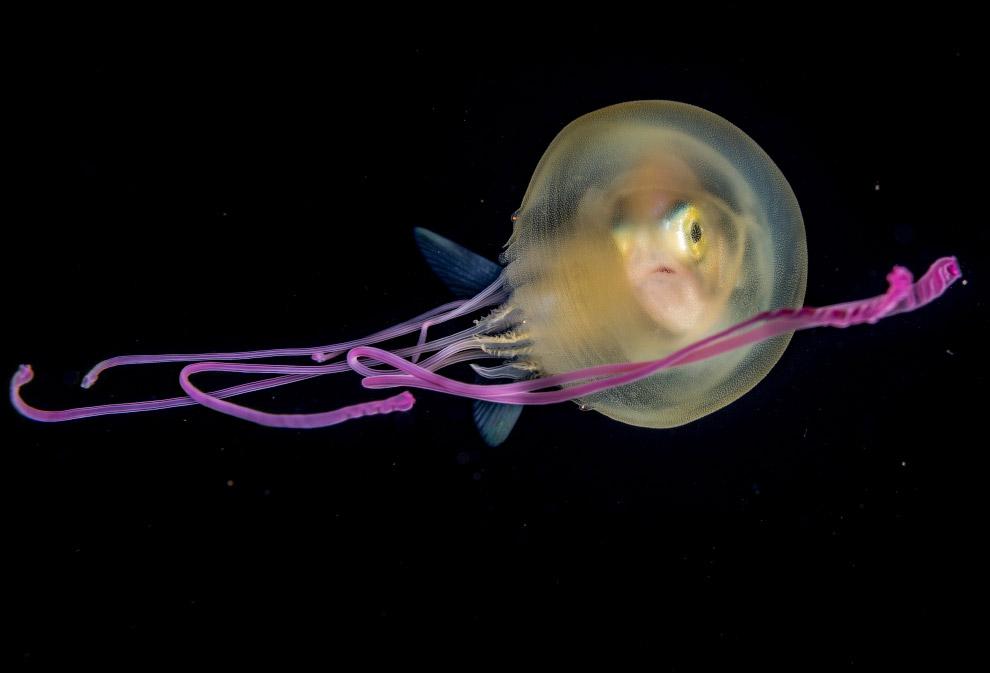 Медуза и взгляд через неё