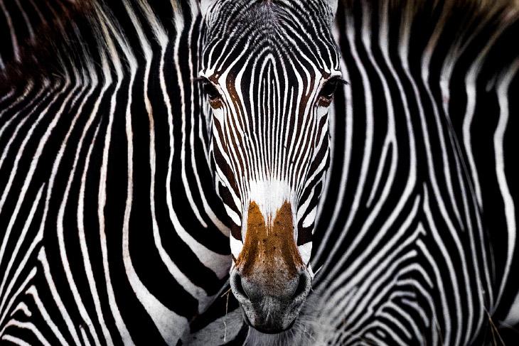 Победители конкура фотографий Nature Conservancy