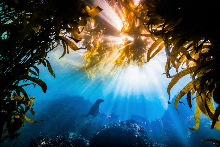 Калифорнийский морской лев в заливе Монтерей