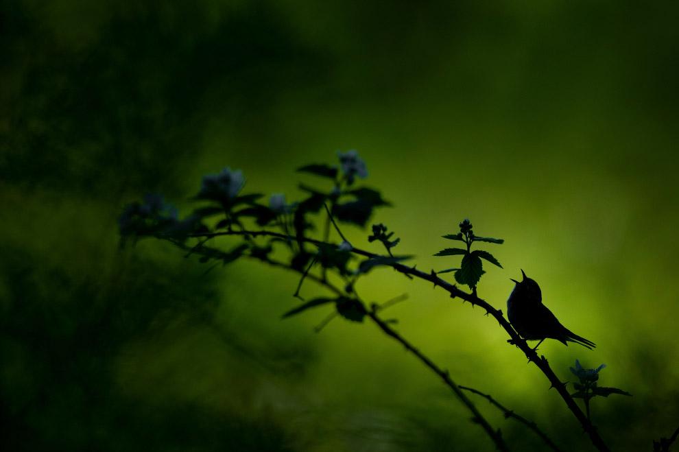 Певчая птичка на фоне яркого леса