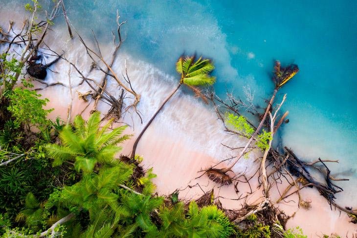 Пальмы свалились в воду
