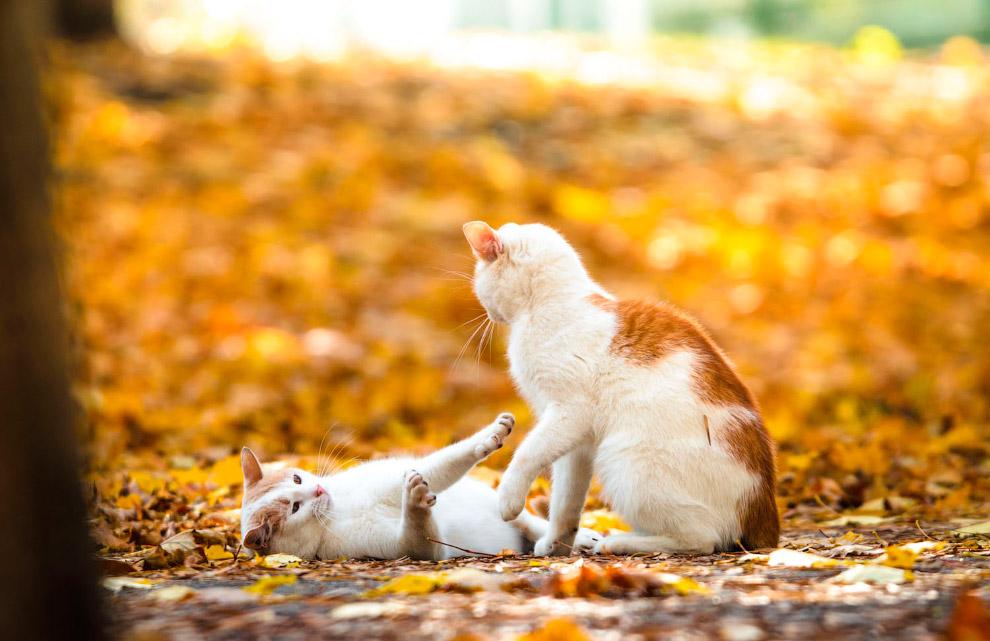 Кошки и осень